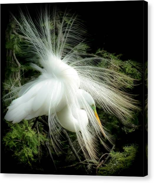 Egrets Canvas Print - Elegance Of Creation by Karen Wiles