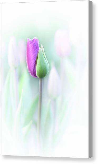 Elegant Canvas Print by Lydia Jacobs