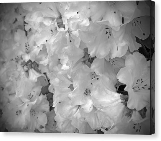 Elegant Soft White Flowers Canvas Print by Tina Wentworth