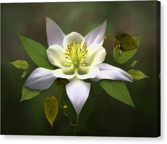 Elegant White Columbine Canvas Print