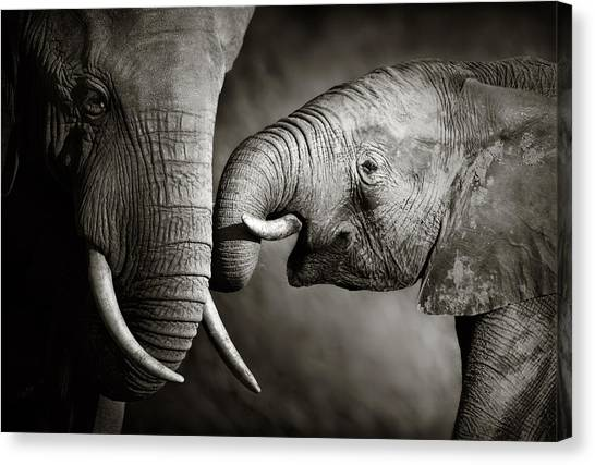 Large Mammals Canvas Print - Elephant Affection by Johan Swanepoel