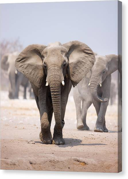 Sandy Desert Canvas Print - Elephant Bathing by Johan Swanepoel