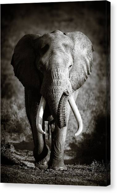 Large Mammals Canvas Print - Elephant Bull by Johan Swanepoel