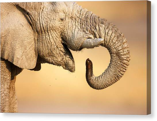 Large Mammals Canvas Print - Elephant Drinking by Johan Swanepoel