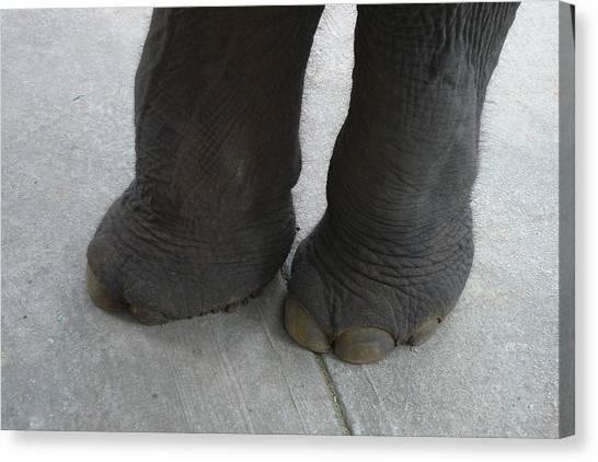 Elephant Feet Canvas Print