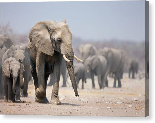 Large Mammals Canvas Print - Elephant Feet by Johan Swanepoel