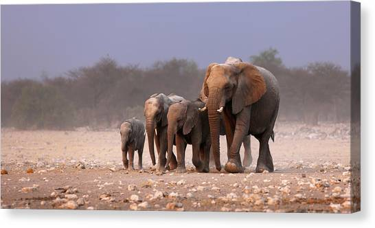 Small Mammals Canvas Print - Elephant Herd by Johan Swanepoel