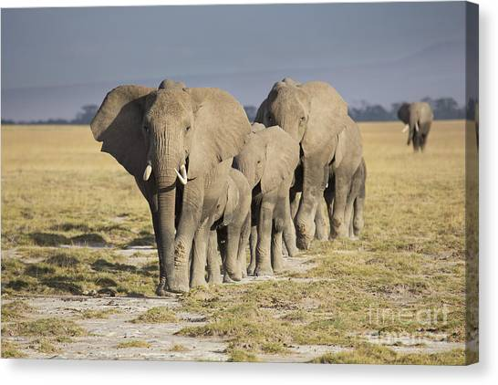 Kenyan Canvas Print - Elephant Herd  by Richard Garvey-Williams