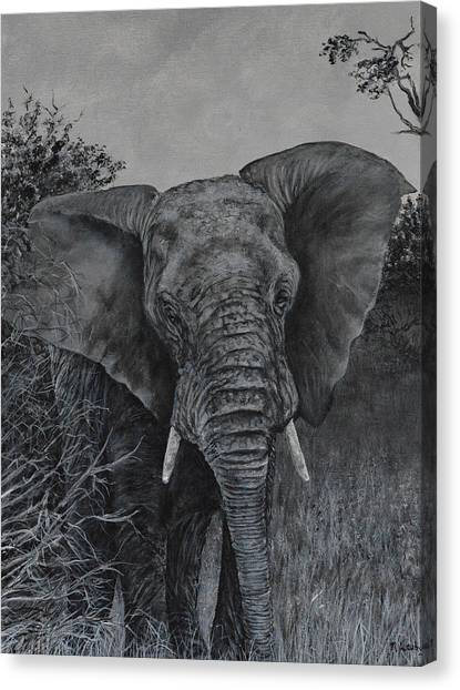 Elephant In African Preserve Canvas Print