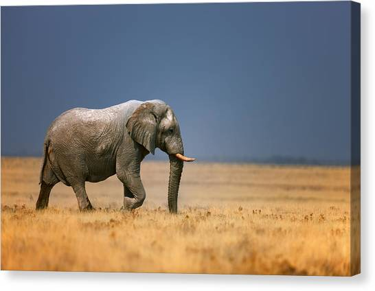 Large Mammals Canvas Print - Elephant In Grassfield by Johan Swanepoel
