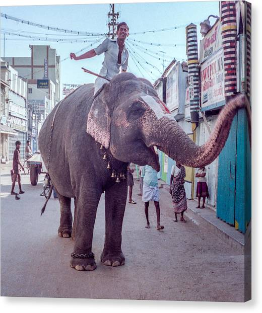 Elephant In The Street In India Canvas Print