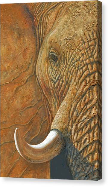 Elephant Matriarch Portrait Close Up Canvas Print