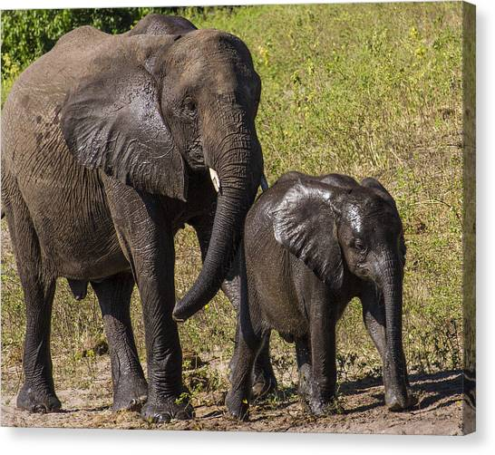 Elephant Mom And Baby Canvas Print