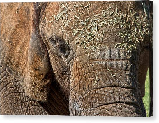Elephant Never Forgets Canvas Print