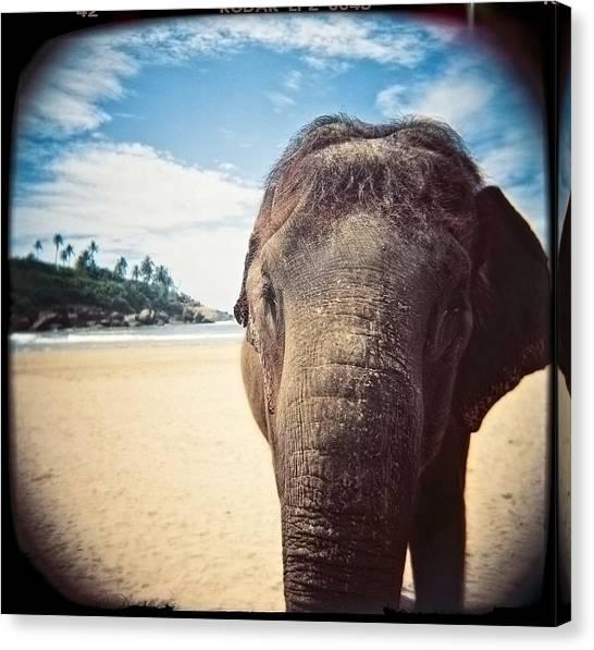 Elephant On The Beach Canvas Print
