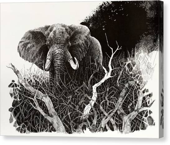 Elephant Canvas Print by Paul Illian