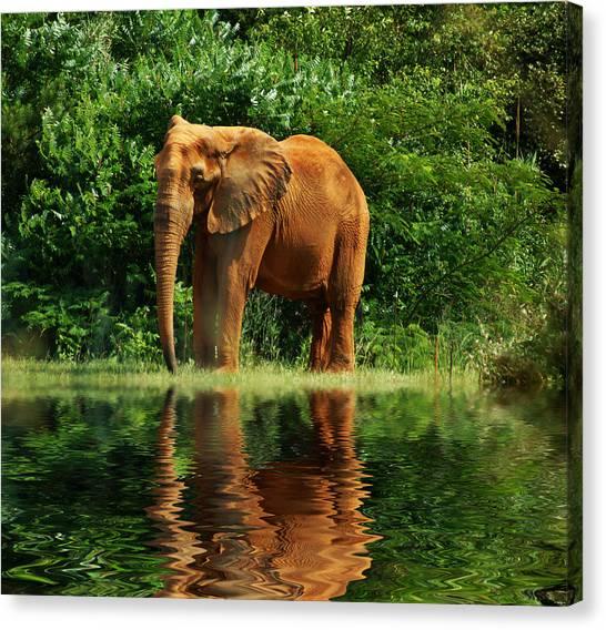 Elephant The Giant Canvas Print