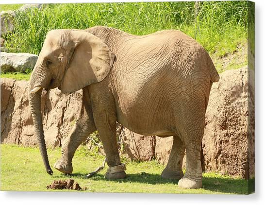 Elephant Canvas Print by Tinjoe Mbugus