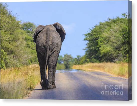 Elephant Walking Canvas Print
