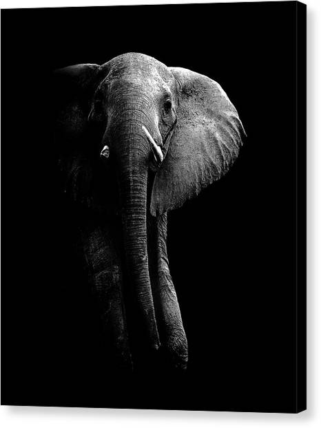 Big South Canvas Print - Elephant! by Wildphotoart