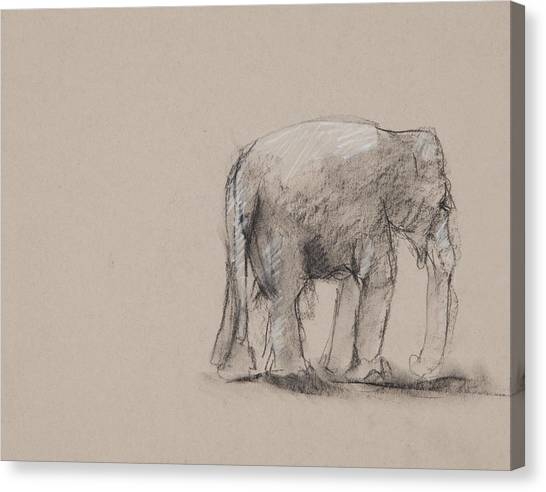Elephant Charcoal Study #1 Canvas Print