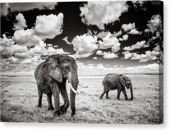 Kenyan Canvas Print - Elephants And Clouds by Mike Gaudaur