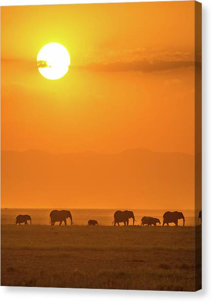 Kenyan Canvas Print - Elephants At Sunset by Ted Taylor