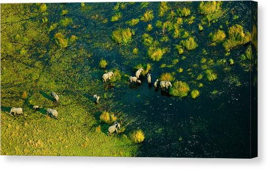 Okavango Swamp Canvas Print - Elephants From Above by Marc Levine