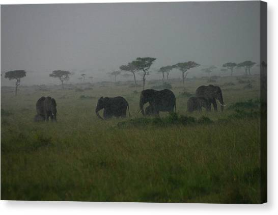 Elephants In Heavy Rain Canvas Print