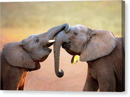 African Canvas Print - Elephants Touching Each Other by Johan Swanepoel