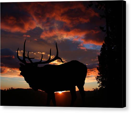 Elk At Sunset Canvas Print