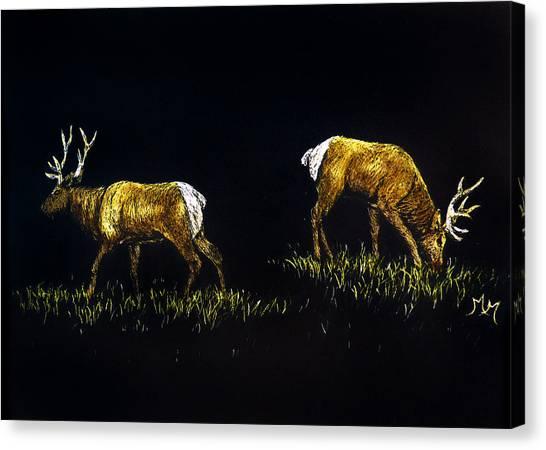 Elk Bulls Canvas Print