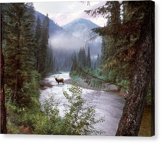 Idaho Canvas Print - Elk Crossing 2 by Leland D Howard