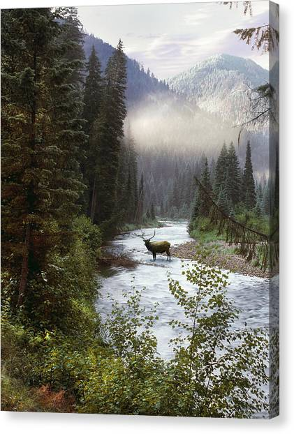 Elk Crossing Canvas Print
