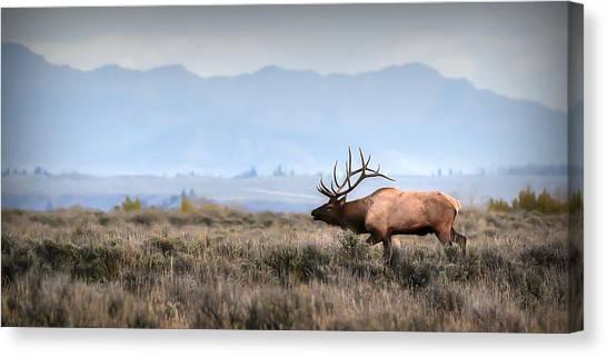 Elk Crossing Canvas Print