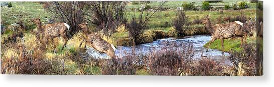 Elk In Motion Canvas Print