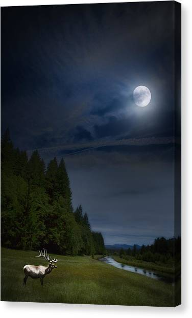 Elk Under A Full Moon Canvas Print
