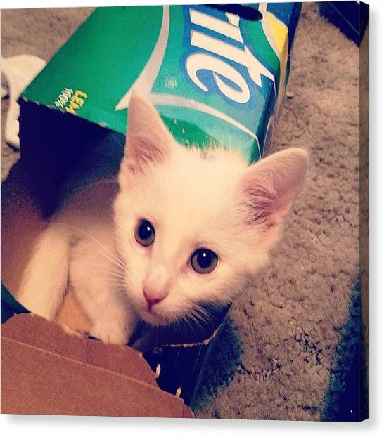 Sprite Canvas Print - Elmer Thinks He's A #sprite Can. #cat by Bekah Clouse