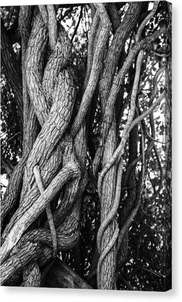 Embracing Rooted Love Canvas Print by Luna Curran