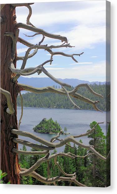 Emerald Bay Through Cedar Canvas Print by Mickey Hatt