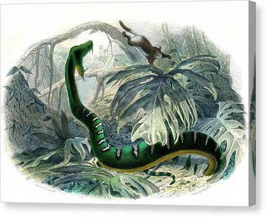 Boas Canvas Print - Emerald Tree Boa by Collection Abecasis/science Photo Library