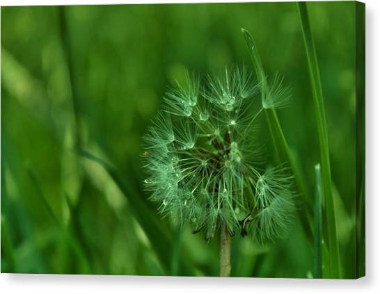 Emeralds Canvas Print by Anna  McAlister