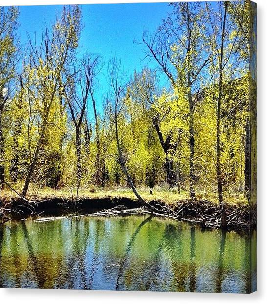 Idaho Canvas Print - Emergent #leaves Finally Giving Way To by Cody Haskell
