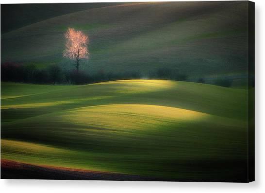 Shrub Canvas Print - Emerging From Dawn by Marek Boguszak
