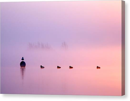 Water Birds Canvas Print - Empty Spaces 2 - Sunrise In The Mist by Roeselien Raimond