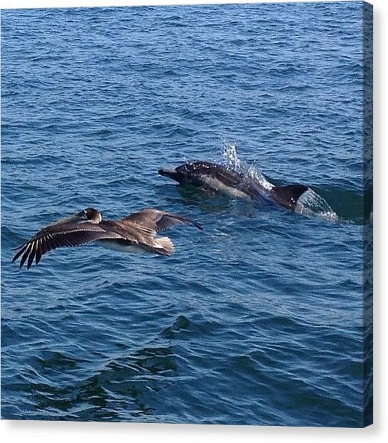 Dolphins Canvas Print - En Route #catalinaisland #pacificocean by Nichole Zellmer