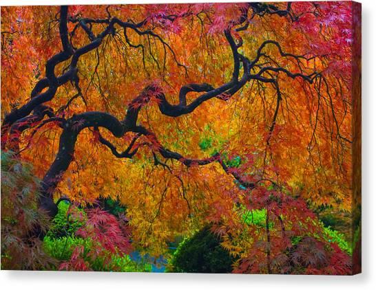 Enchanted Canopy Canvas Print