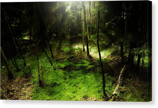 Enchanted Forest Canvas Print by Kim Lagerhem