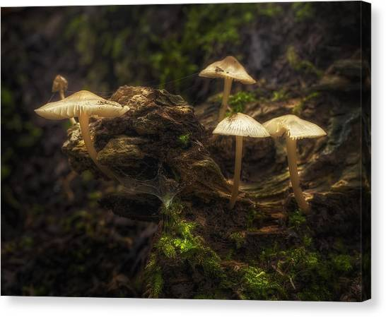 Mushrooms Canvas Print - Enchanted Forest by Scott Norris