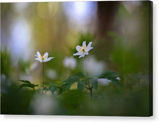 Enchanted Spring Canvas Print